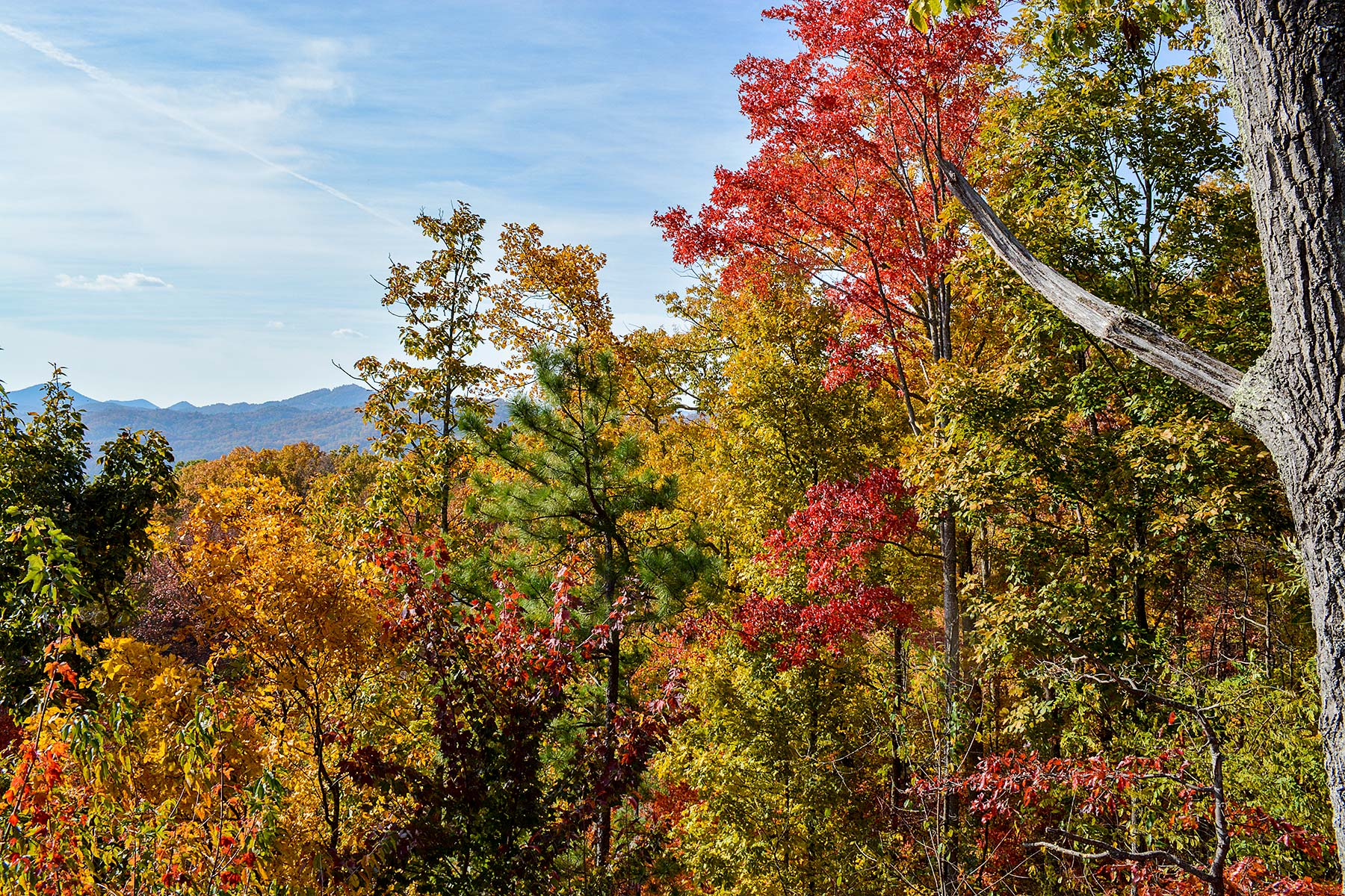 Beautiful fall colors in the Smoky Mountains